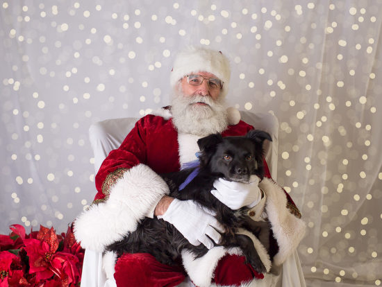portraits with santa, dogs pictures with santa, santa pictures, dog photographer, santa clause came to town